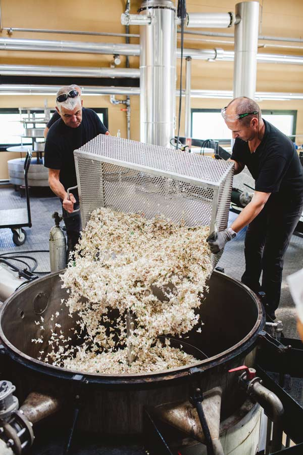 Весь жасмин с полей семьи Mul идет на изготовление Chanel N 5